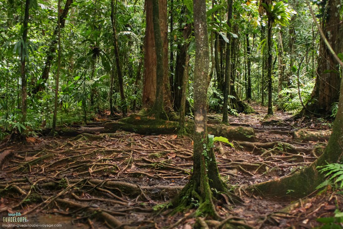 Cascade-saut-des-trois-cornes-jungle