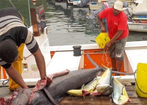 Marché aux poissons de Baille Argent