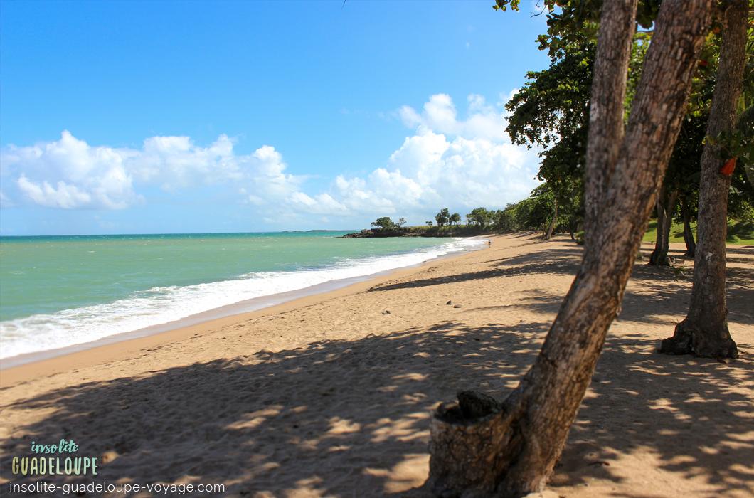 plage-des-amandiers-guadeloupe-sable-fin-ombre-belle-basse-terre-tranquille-eau-turquoise-ombre