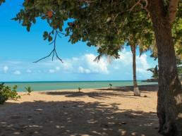 Plage des Amandiers, Guadeloupe.