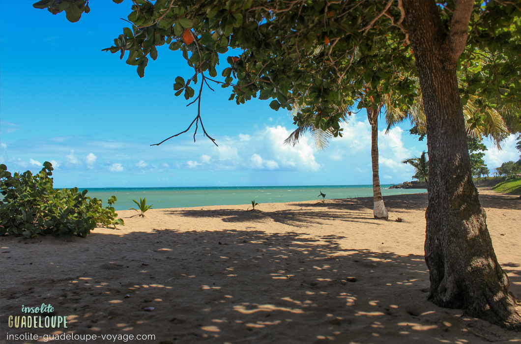 plage-des-amandiers-guadeloupe-sable-fin-ombre-belle-basse-terre-tranquille