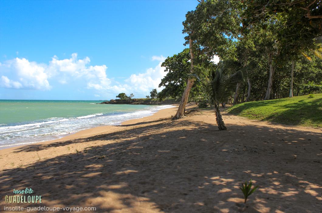 plage-des-amandiers-guadeloupe-sable-fin