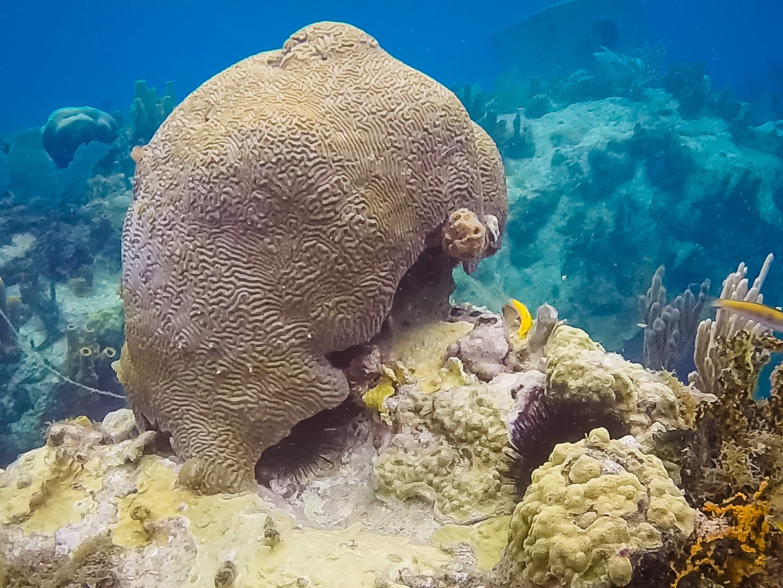 Conseils pratiques, fond-guadeloupeen-corail-eponge-plongée-snorkeling-PMT-guadeloupe