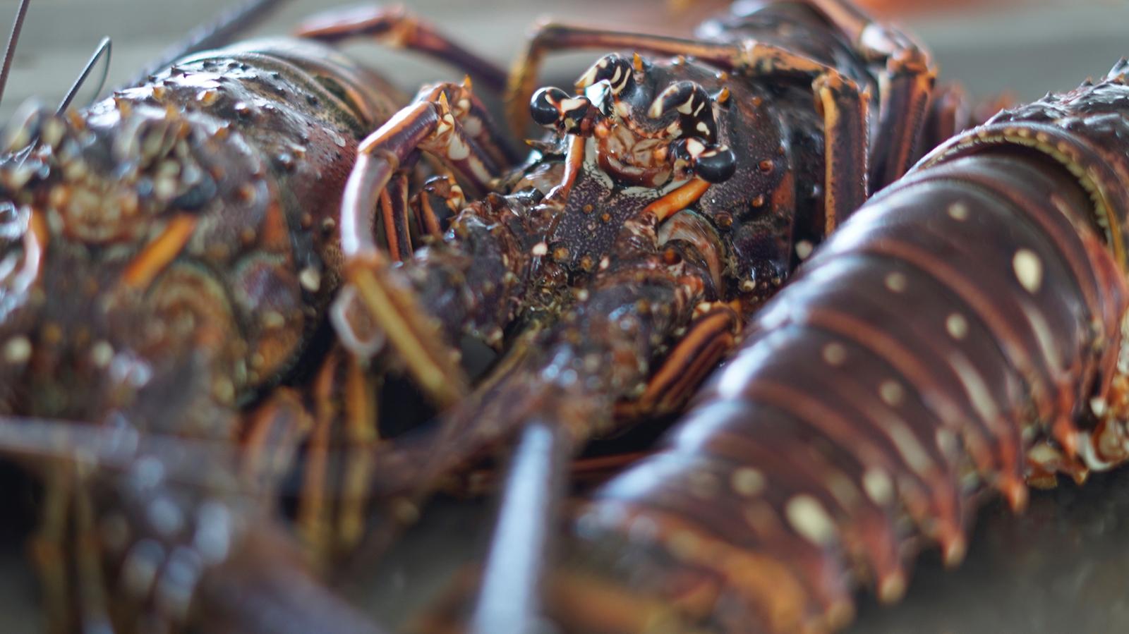Langoustes, Marché aux poissons de Baille-Argent, Insolite Guadeloupe.