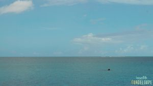 Plage du Souffleur, Port-Louis, Guadeloupe, vue mer. Insolite Guadeloupe Voyage