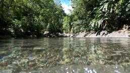 Excurssion-randonnee-cascade-paradis-grande-riviere-vieux-habitant-guadeloupe-guide